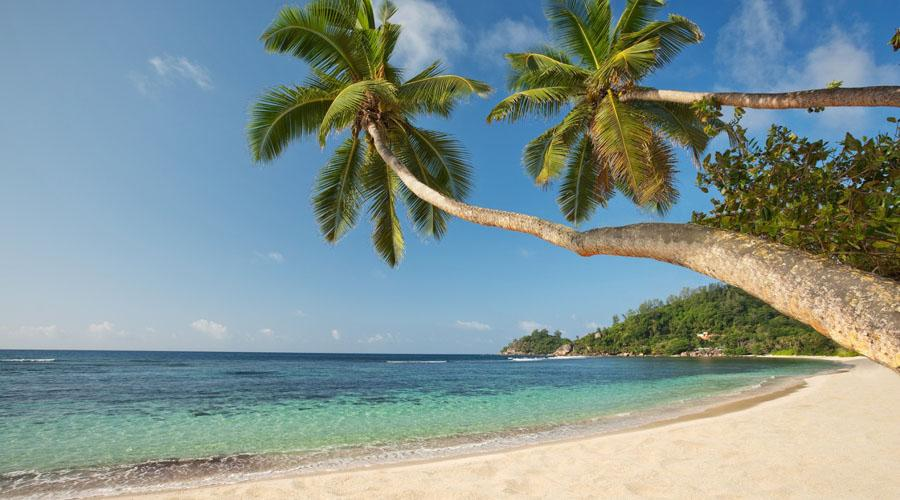 Baie Lazare Beach With Palm Trees