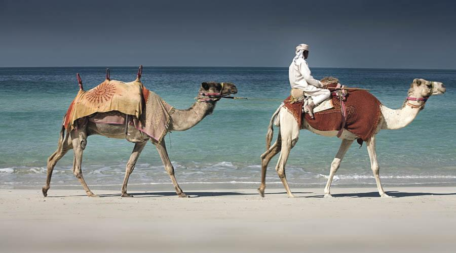 The Ritz Carlton camel ride on the beach