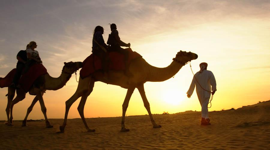 Arabian Court Camel ride